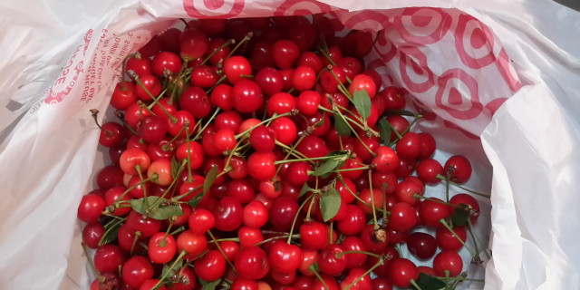 Delicious cherries are ripe!
