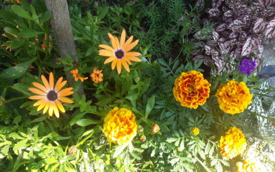 Beautiful colors of summer here on the farm…